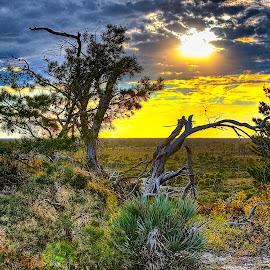 Sunset in JDSP by Sandy Friedkin - Landscapes Sunsets & Sunrises ( clouds, sunset, scrub pines, palmettos, landscape,  )