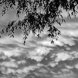 A Nebraska thunderstorm by Jeffrey T Johnson - Landscapes Weather ( clouds, thunderstorm, weather, cloudscape, storm )