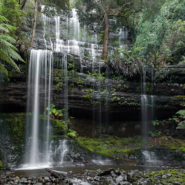Russell Falls, Tasmania by Paul Weller - Landscapes Waterscapes ( tasmania, mount field national park, russell falls,  )