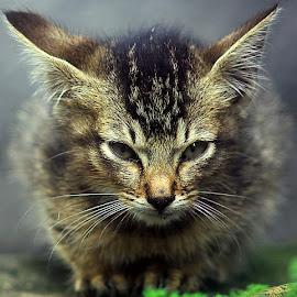 hey... by Ediansyah Edoy - Animals - Cats Kittens