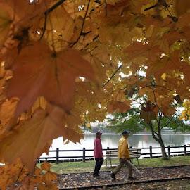 Autumn by Kokawa Saki - People Couples ( walking, autumn, leaves, couples, fall, color, colorful, nature )