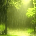 Rain In Green Scenary Live Wal