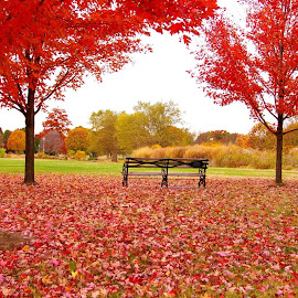 Autumn Bench by Sean Murray - Nature Up Close Leaves & Grasses