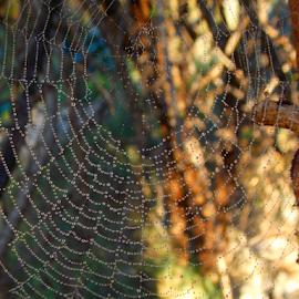 by Marina Blazevic - Nature Up Close Webs