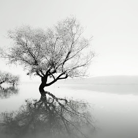 that tree by Murat Kasım - Black & White Landscapes