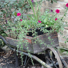 Barrel of Roses by Susanne Swayze - Novices Only Flowers & Plants