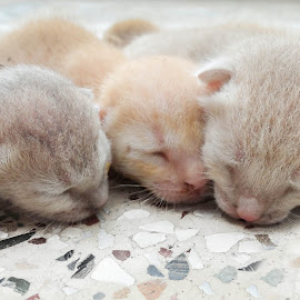 by Yash Mishra - Animals - Cats Kittens