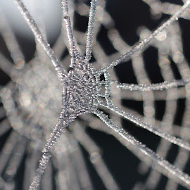 Frozen Webs by Peter Wood - Nature Up Close Webs ( macro, webs, spiders, ice, frost, web, frozen )