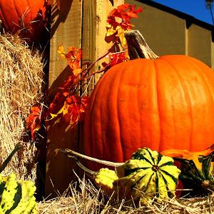pumpkin patch 2.jpg
