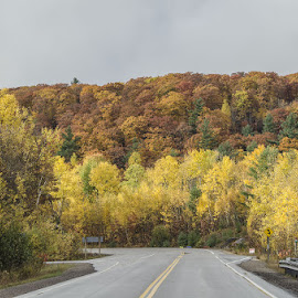 Fall Colors by Paul Mitchell - Landscapes Travel ( highway, colors, fall, trees, travel, color, colorful, nature )