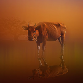 Sapi Alas by Azay Boyan - Digital Art Animals