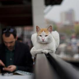 by Sveta Celik - Animals - Cats Portraits