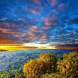 At Peace in Morning Solitude by Phil Koch - Landscapes Prairies, Meadows & Fields ( vertical, photograph, frost, farmland, yellow, leaves, love, sky, nature, tree, autumn, flower, orange, art, twilight, agriculture, horizon, portrait, environment, dawn, season, serene, trees, floral, inspirational, wisconsin, natural light, ray, landscape, phil koch, spring, sun, photography, farm, horizons, inspired, clouds, office, park, green, scenic, morning, shadows, wild flowers, field, red, fog, blue, sunset, fall, peace, meadow, summer, beam, earth, sunrise, mist )