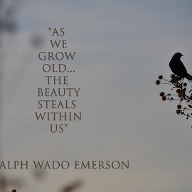 Emerson's Bird by Taylor Gillen - Typography Quotes & Sentences ( calm, bird, nature, quote, ralph waldo emerson )