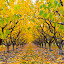 The Orchard by  J B  - Nature Up Close Trees & Bushes ( fall leaves, fall colors, color, fall, orhard, colorful, nature )
