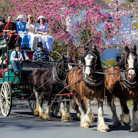 horse drawn carriage, by Vibeke Friis - City,  Street & Park  Neighborhoods ( passengers, costumes, old, horses, carriage )