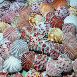 Shells by Bil Frhe - Instagram & Mobile iPhone ( shell, color, sea )