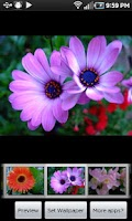 Screenshot of Mothers Flowers