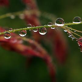 by Saefull Regina - Nature Up Close Natural Waterdrops