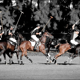 The Polo Chase by Jasper Jackson - Sports & Fitness Other Sports ( rider, equine, horses, action, polo )
