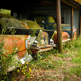 Country Car Collection by Lou Plummer - Transportation Automobiles ( car, bel air, truck, chevrolet, automobile, ford, chevy,  )