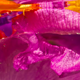 Water flowers 4 by Brian Ib Nielsen - Abstract Macro ( water, orange, colourful, leafs, violet, pink, yellow, flowers, colours )