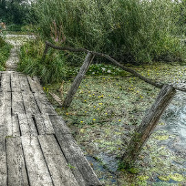 Photo of the broken old bridge. by Dunja Dretvić - Buildings & Architecture Bridges & Suspended Structures ( wooden, summer, lake, reeds, small bridge )