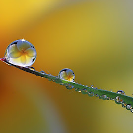 :: Two Dews :: by Dedy Haryanto - Nature Up Close Natural Waterdrops (  )