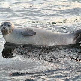 by Kristín Hávarðsdóttir - Animals Sea Creatures