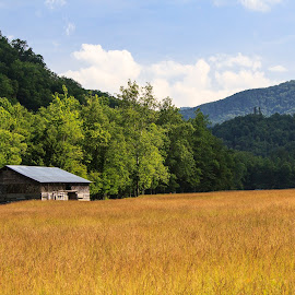Cataloochee Valley by Dave Joye - Landscapes Prairies, Meadows & Fields ( field, cataloochee, barn, great smoky mountains national park, smokey mountains, north carolina )
