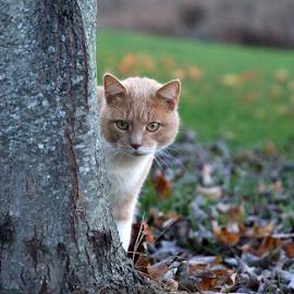Stalker by Kim Davis - Animals - Cats Playing