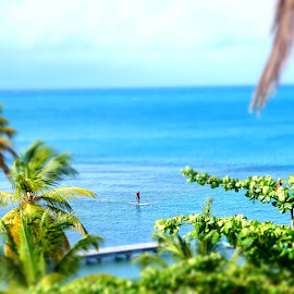 Caribbean paddleboard by Shona McQuilken - Transportation Other ( palm tree, sea, surf, paddle, sun,  )