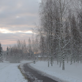 A New Day by Bojan Bilas - City,  Street & Park  City Parks ( snow, path, trees, landscape, city park, daybreak, city )