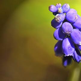 Bloudruifie by Efraim van der Walt - Nature Up Close Gardens & Produce ( macro, nature, close-up,  )