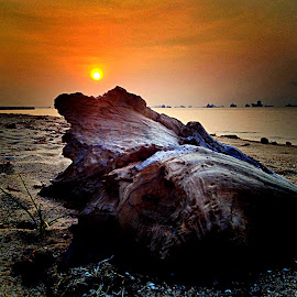 Driftwood and sunrise by Janette Ho - Instagram & Mobile iPhone (  )