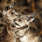 kangaroo hug.jpg