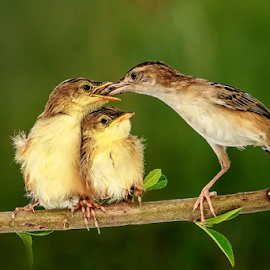 Yummy Breakfast by Roy Husada - Animals Birds