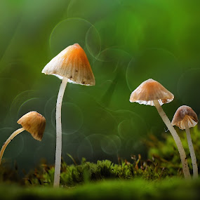 we are family by Girdan Nasution - Nature Up Close Mushrooms & Fungi