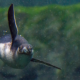 Yes, I see you by Cheryl Waring - Animals Sea Creatures (  )