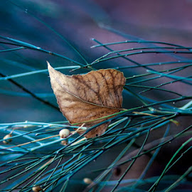 by Lazzy Raj - Nature Up Close Leaves & Grasses