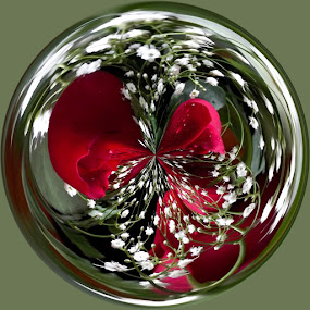 Red Roses & Baby Breath by Colleen Legree - Abstract Fine Art ( abstract, circular, red, roses, fine art, baby breath, whith )