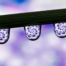 water drops by Youssef Elboukhari - Abstract Water Drops & Splashes ( canon, water, macro, reflection, drops, drop water, tamron,  )