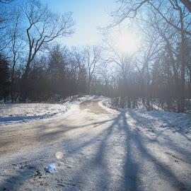 Bright winter street by Ito Masaki - City,  Street & Park  Amusement Parks ( tree, shadow, street, winter[, light, sun,  )