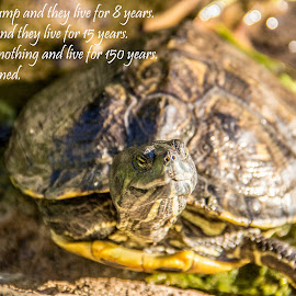 Turtles say what by Jason Griffiths - Typography Captioned Photos ( #turtle, #turtlesrule, #turtlequote, #turtlepower )