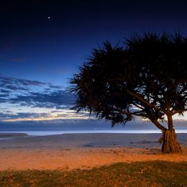 Dawn at Moffat Beach by Howard Ferrier - Landscapes Beaches ( clouds, sand, dawn, moffat beach, pandanus, ocean, beach )