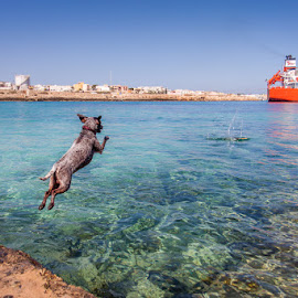 by Guido Todarello - Animals - Dogs Playing ( playing, mare, jumping, cane, salto, sea, dog, gioco )