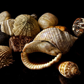 Shells by Patrizia Sapia - Nature Up Close Other Natural Objects ( conchiglie )