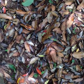 Cheju Island in S.Korea by Sukhun Kang - Nature Up Close Leaves & Grasses