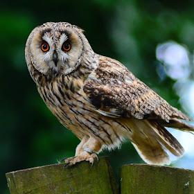 birds of prey 2014 891.jpg