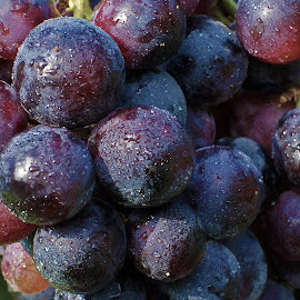 Grapes by Ad Spruijt - Food & Drink Fruits & Vegetables ( grapes, grape, grapes close up )